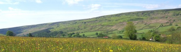 cropped-hay-meadow-in-landscape-red-house-rosedale.jpg