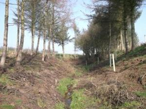 Conifer removal and native broadleaved planting on Lealholm Estate