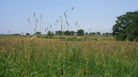 Grassland in Summer - Danby Dale
