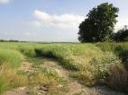 Farmland edge
