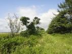Derelict hedgerow