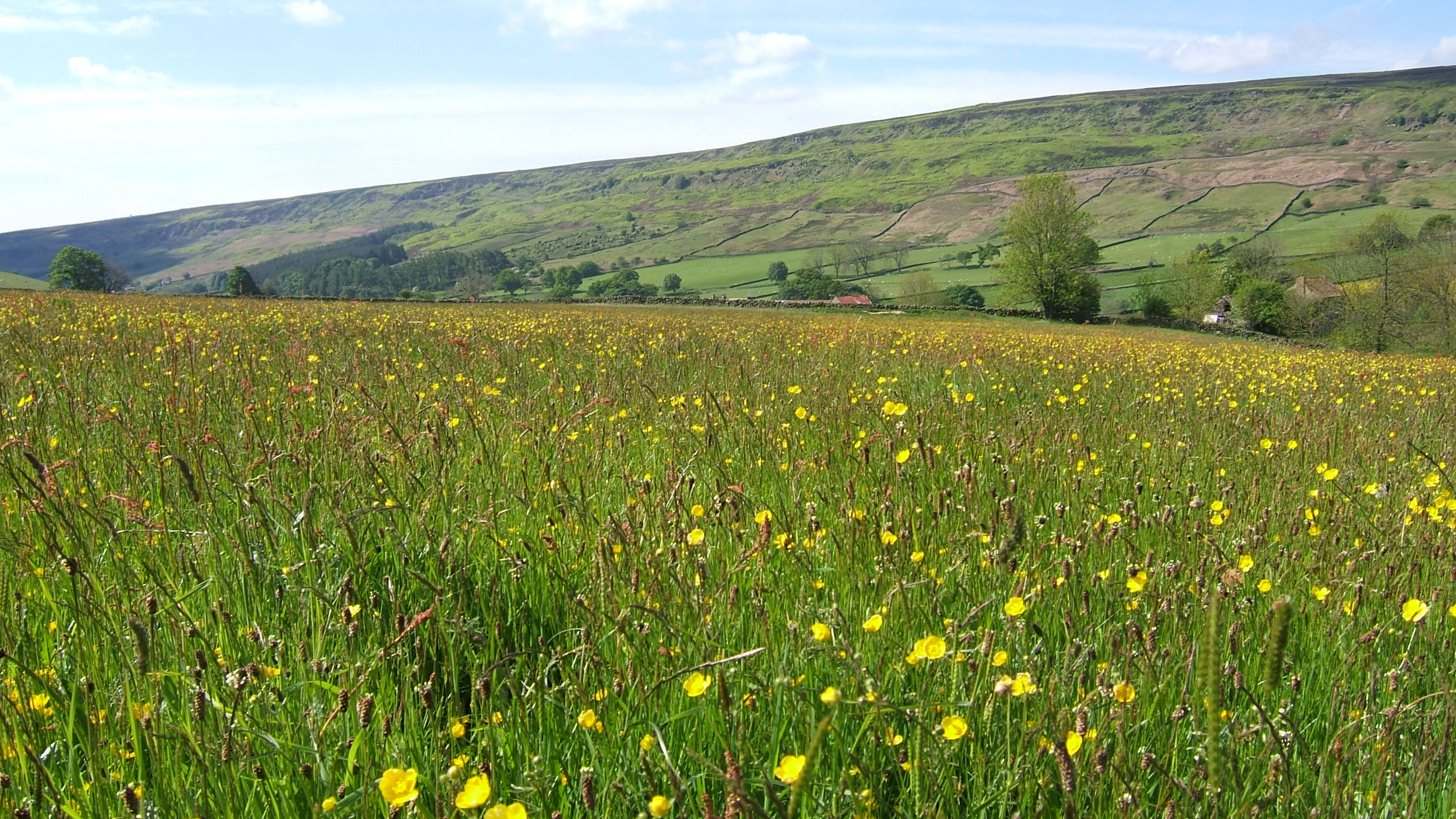Rosedale s mini meadow part 1 the official blog for for The meado