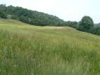 Grassland expanse
