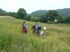 Looking for species rich grassland