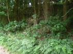 Along the shady woodland verge