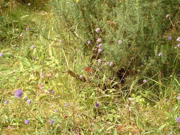 No.21 Skelton Bnk + butterfly