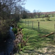 Esk tributary - willow stabilisation and bank side fencing in place.