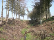 Esk tributary - conifer felling and replacement broadleaved tree planting. The broadleaved trees will let in light so that ground vegetation regenerates and helps stabilise the banks.