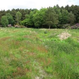 Cloughton Dyke - cross dyke. Copyright NYMNPA.