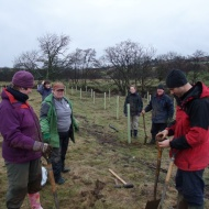 North York Moors Conservation Volunteers - tree planting beside the River Esk at Danby.