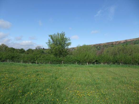 Managed hedgerow, Glaisdale. Copyright NYMNPA.