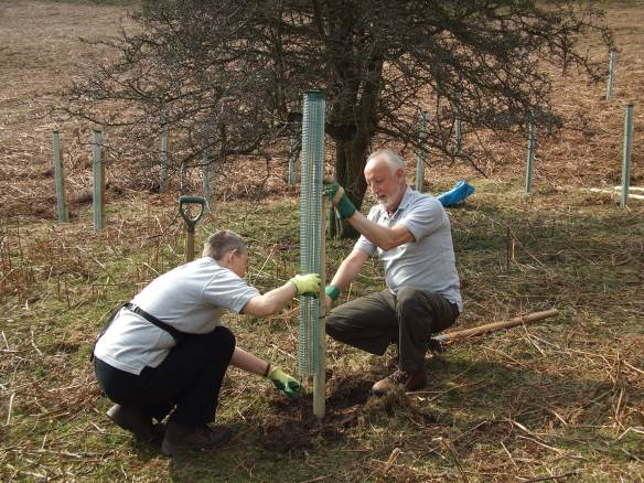 Slowing the Flow - tree planting