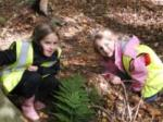 Teaching Trees - coordination of woodland classess for local schools