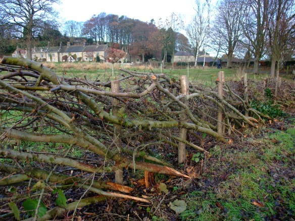 TBS Hedge Laying, Moors National Park Centre Danby - completed