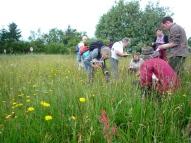 2014-06-30 Grassland Volunteer Survey Training - by Kirsty Brown