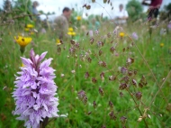 2014-06-30 Sutton Bank - Common Spotted Orchid, Quaking Grass - by Kirsty Brown