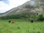 2014-06 Grazing Course - Cwm Idwal - by Kirsty Brown
