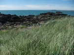 2014-06 Grazing Course - Llandwyn Island - by Kirsty Brown