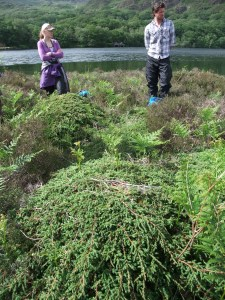 2014-06 Grazing Course - Llyn Dinas - by Kirsty Brown