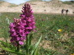 2014-06 Grazing Course - Newborough Warren - by Kirsty Brown