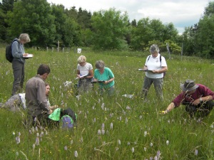 Linking Landscapes - Grassland Volunteers, practice surveying at Sutton Bank in the summer