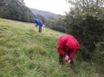 MAD Volunteers - thistle pulling