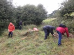 MAD Volunteers - thistle pulling