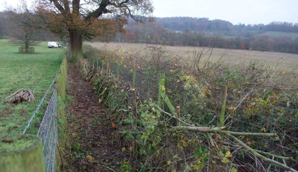 Hedge laying - Kirsty Brown