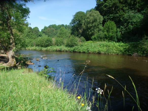 River Rye in Duncombe Park - where Himalayan balsam is being tackled through a Higher Level Stewardship agri-environment agreement