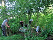 River Esk Volunteers - Himalayan balsam control