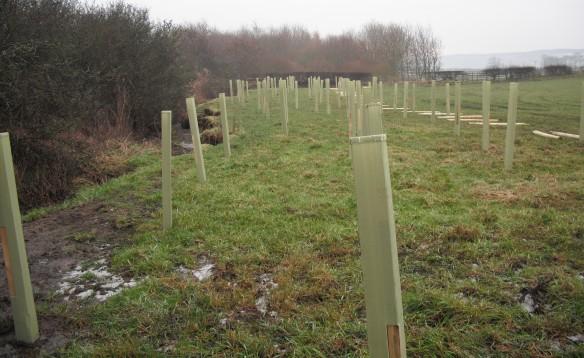 Bankside tree planting underway - NYMNPA