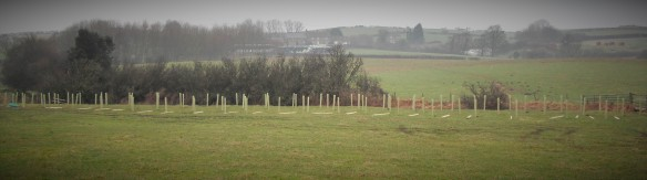 View of tree planting and fencing work near Mickleby - NYMNPA