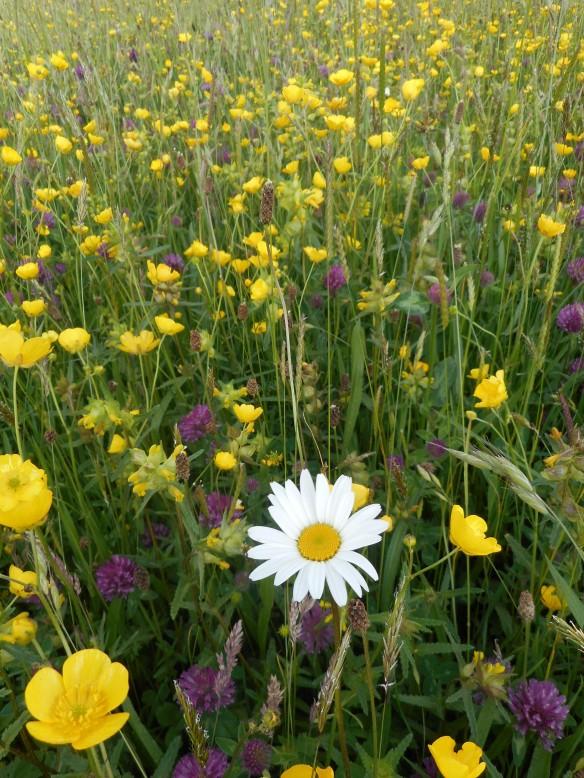 Flora Locale Training Day - June 2015 - Michael Johnson, NYMNPA