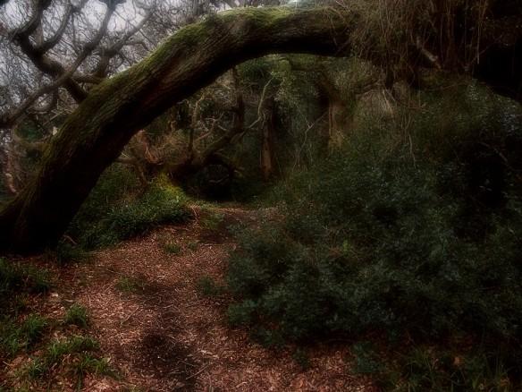 Magic wood of Hayburn Wyke by robiuk - http://www.trekearth.com/gallery/Europe/United_Kingdom/England/North_Yorkshire/Cloughton_Newlands/photo155135.htm