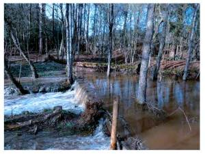 Large woody debris dam during flood - from Forest Research: appendices to Phase 2 Final Report, May 2015