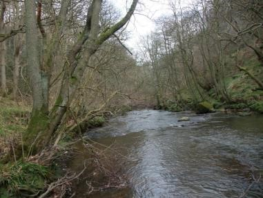 Potential FWPM re-introduction site on River Esk - NYMNPA