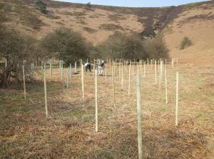 Slowing the Flow tree planting - Levisham Estate - NYMNPA