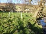 WREN FWPM Project - tree planting - NYMNPA