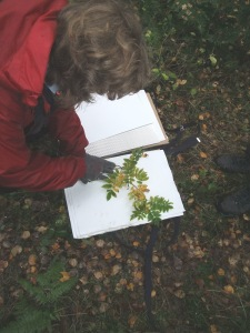 UK National Tree Seed Project - collecting in the North York Moors - copyright NYMNPA