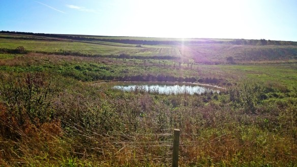 Dew Pond - South Downs NP, Farm Liaison Officers Meeting 2015 - copyright Roy McGhie, NYMNPA