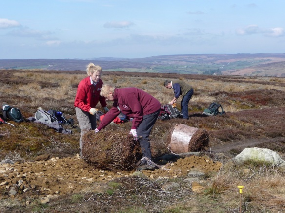 Danby Rigg Cairnfields - extensive prehistoric landscapes. Volunteers spreading crushed sandstone and heather brash to repair and protect archaeological features along the Danby Rigg bridleway. Copyright NYMNPA
