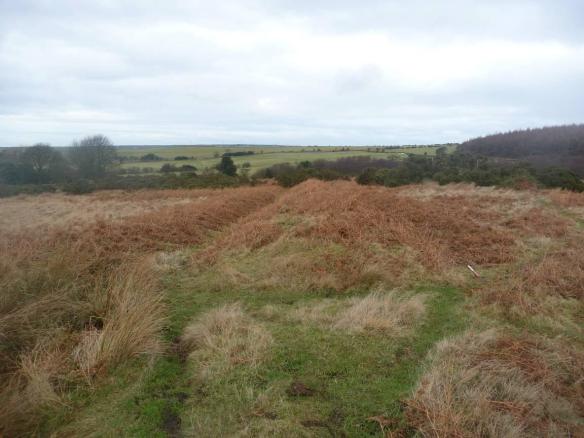 Eden House cairnfield and deer park boundary before bracken spraying - copyright Archaeo-environment Ltd