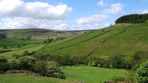 Farmed landscape - Rosedale - copyright Ami Walker, NYMNPA