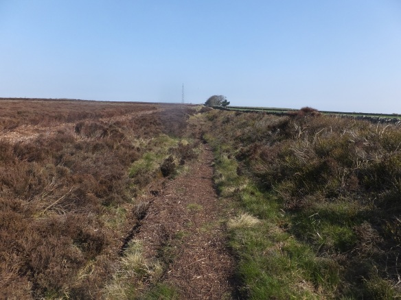 Green Dike - repairs and heather brash spread along the monument - new bridleway route cut to the left. Work in progress because boggy areas along the new route mean people still using the old route. Copyright NYMNPA.