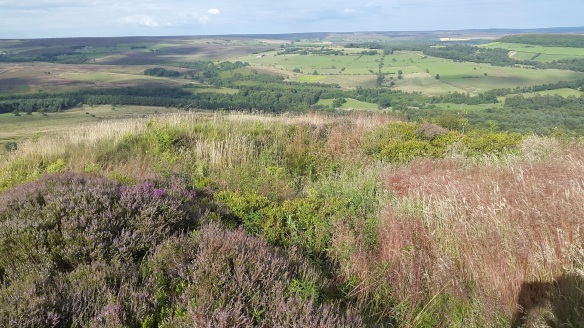 Potato Nab after scrub removal and 2 years of bracken spraying carried out by land owner - copyright R Watson