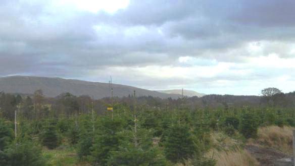 Growing 'Christmas Trees' in Scotland - http://www.bbc.co.uk/news/uk-scotland-35050437