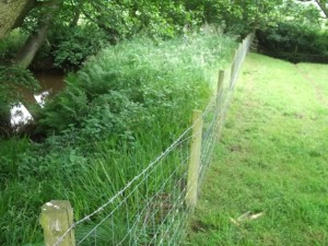 Example of stock fencing and riparian buffer in Esk Catchment - copyright NYMNPA