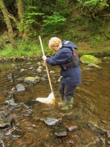 Riverfly Monitoring Volunteer - copyright NYMNPA