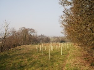 Example of new tree planting in Esk Catchment, for stronger banksides - copyright NYMNPA
