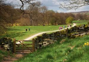 Farndale Daffodil Walk. Copyright NYMNPA.